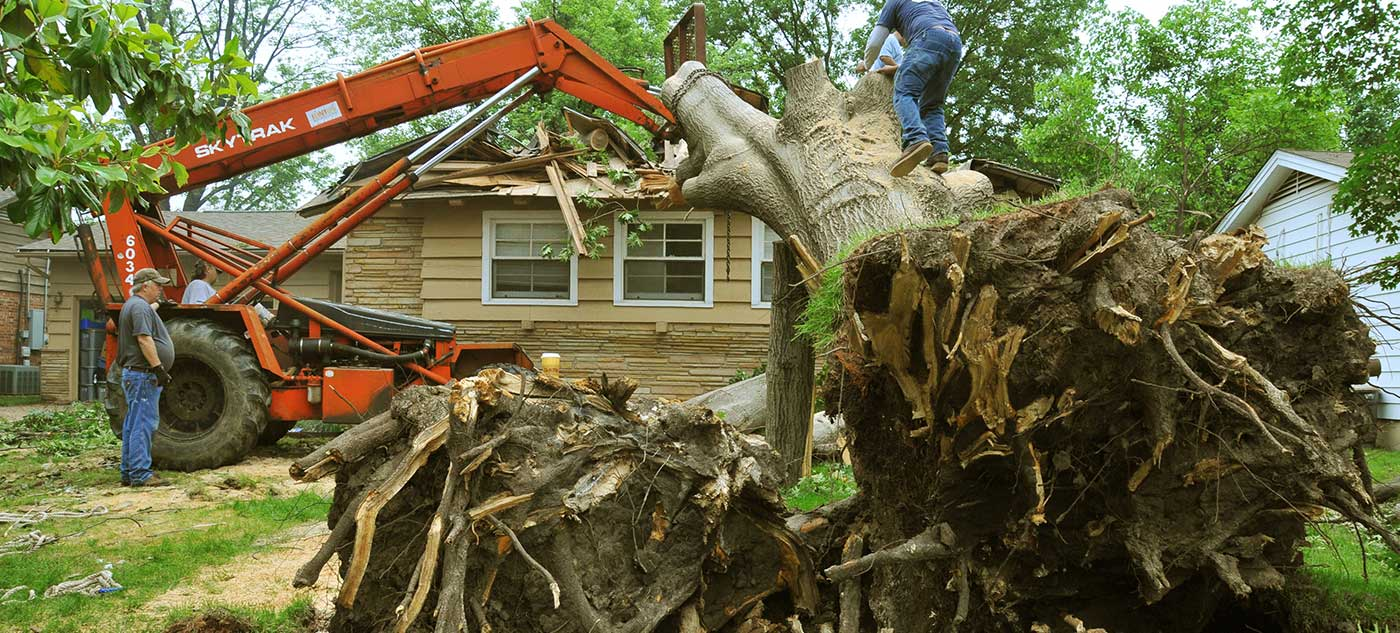 Tree-removal-best-company