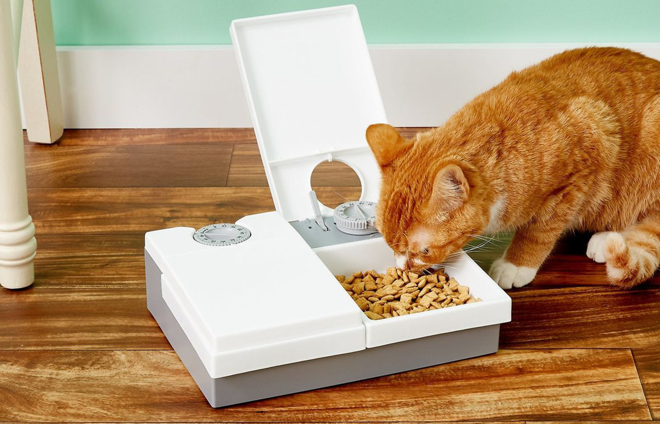 petsafe automatic cat feeder